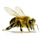 QVIST Hunters & Gatherers V - Koken met Bijen